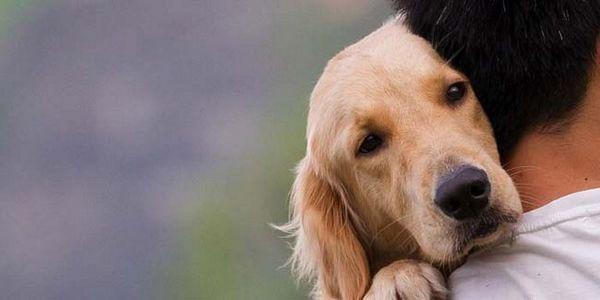I cani hanno sentimenti? La scienza ha la risposta