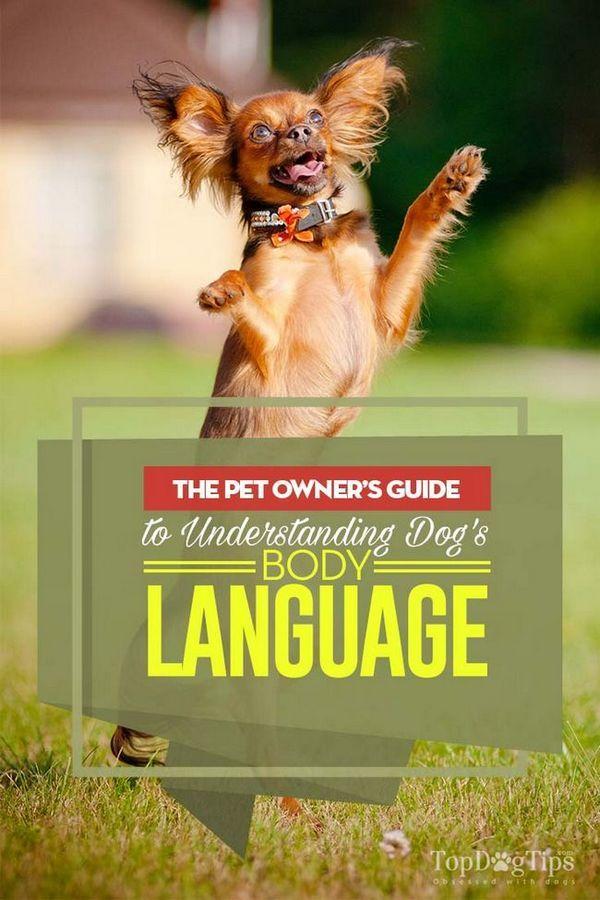 Linguaggio del corpo del cane: la guida del proprietario dell`animale domestico per capire i cani