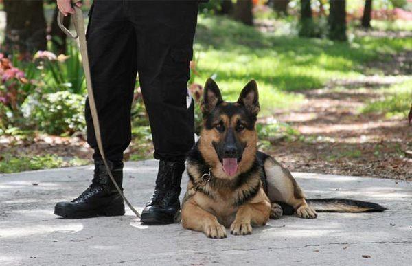 Certificazione per addestratori di cani: guida per principianti