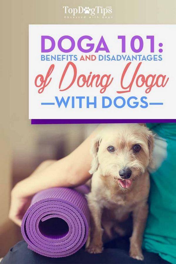 Doga 101: benefici e precauzioni per fare yoga con i cani