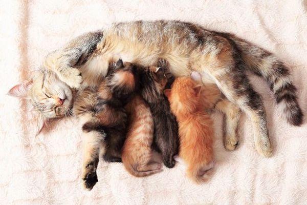 Gravidanza felina: come prendersi cura di un gatto in stato di gravidanza