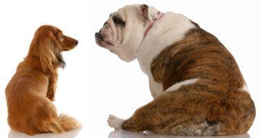 Fibra per cani: c`è qualche vantaggio?