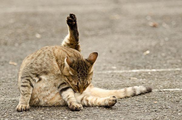 Informazioni divertenti su palle di pelo di gatto