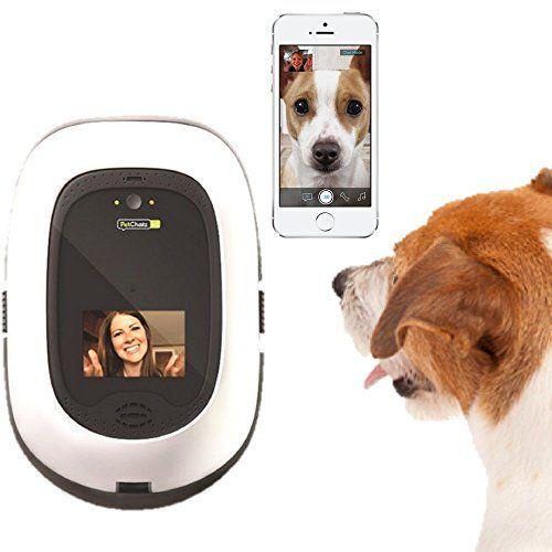 Giveaway: pet telecamera per animali domestici hd (valore $ 380)