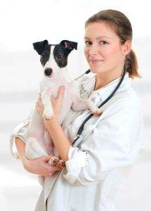Cura del cane olistica: la guida definitiva basata sull`evidenza