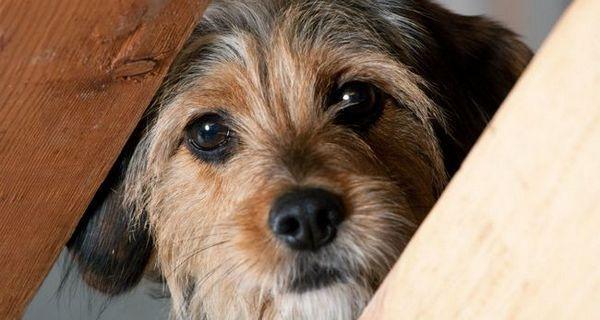 Come i proprietari perdono la fiducia dei loro cani