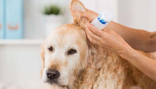 Pulitore per orecchie per cani fatto in casa