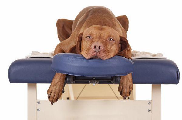 Come padroneggiare l`arte del massaggio del cane