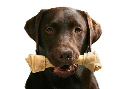 requisiti nutrizionali per cani