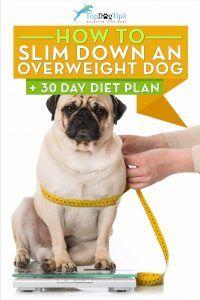 Come dimagrire un cane sovrappeso (programma di dieta di 30 giorni)