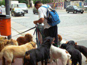 Come iniziare un business di cani da passeggio