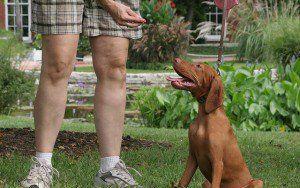 Come iniziare un business da compagnia con i cani