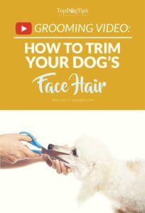 Come tagliare i peli del tuo cane con le forbici
