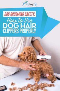 Come usare i tagliaunghie per tagliare o tagliare i peli del cane