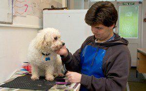 Come scrivere un business plan per governare i cani