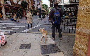 Come scrivere un piano aziendale per la cura del cane