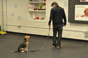 Come scrivere un piano aziendale di addestramento per cani