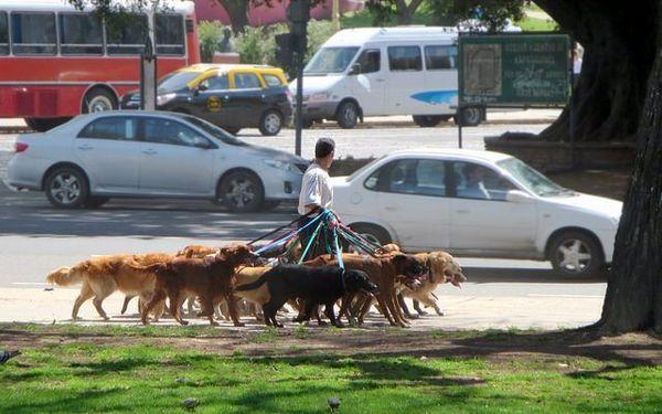 Come scrivere un piano aziendale per camminare con il cane