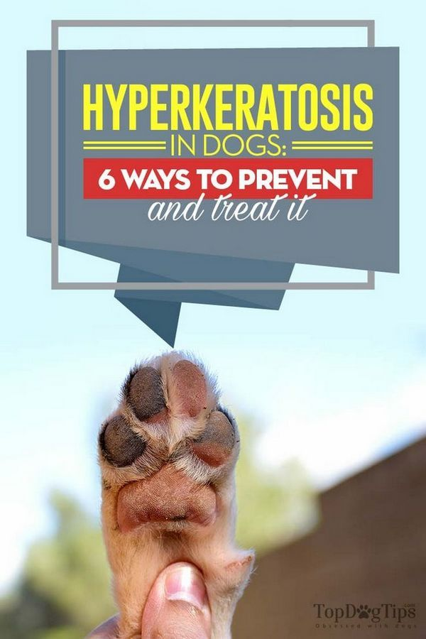 Ipercheratosi nei cani: 6 modi per prevenirlo e curarlo