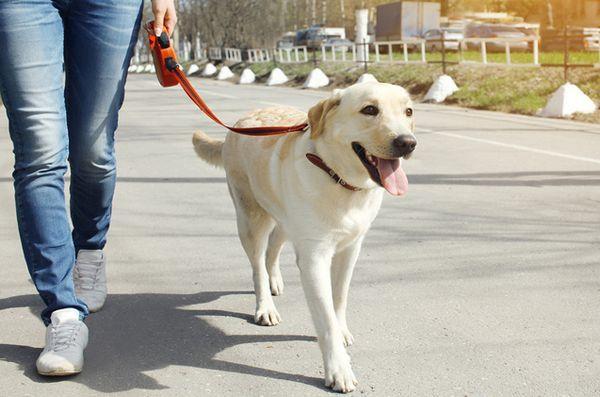 L`orologio del dog walker tiene d`occhio il tuo vicinato?