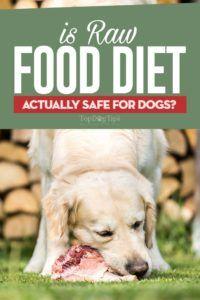 La dieta dei cibi crudi è sicura per i cani?