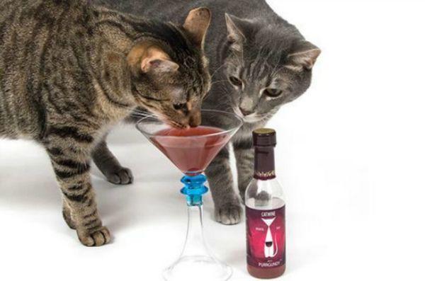 I gatti impazziscono per questo vino di PetWinery