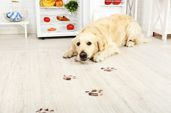 Mantieni la tua casa al sicuro e immacolata con prodotti per la pulizia naturale adatti agli animali domestici