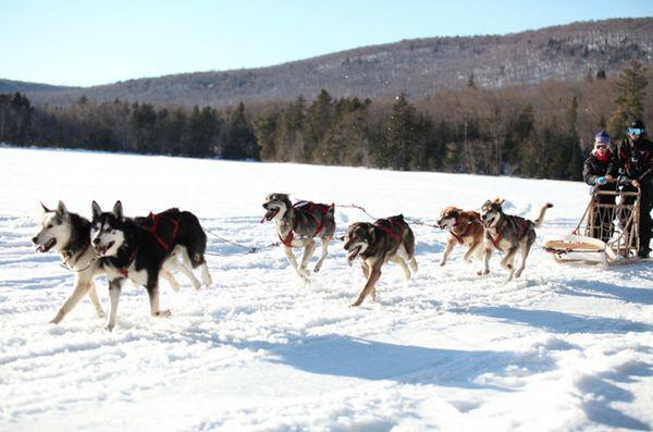 I bambini malati di cancro si uniscono ai cani da slitta per affrontare il grande nord bianco
