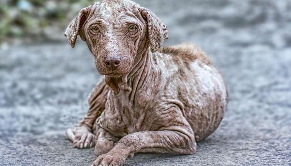 Rogna nei cani: sintomi, prevenzione e trattamenti