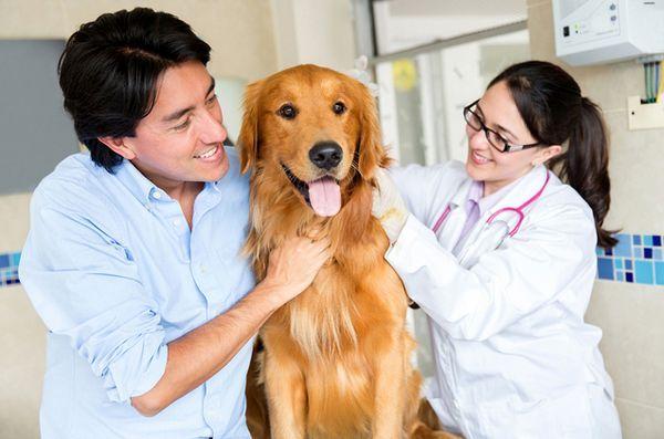 Le nuove scoperte sulla ricerca sul cancro del cane potrebbero giovare anche alle persone