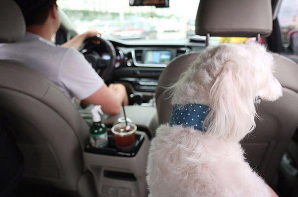 I taxi per animali domestici sono un grande affare in Corea del Sud