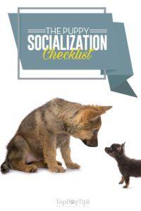Lista di controllo per la socializzazione dei cuccioli per i proprietari nuovi ed esperti