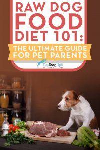 Dieta crudista per cani 101: la guida definitiva