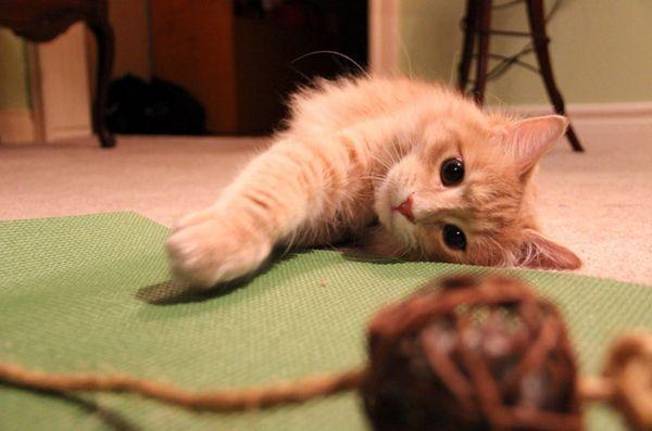 Recensione: giocattolo di stuoia yoga felina yogi