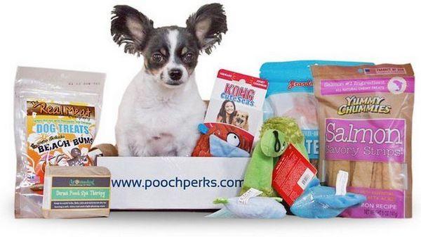 Recensione: casella di sottoscrizione cane pooch perks (2018)