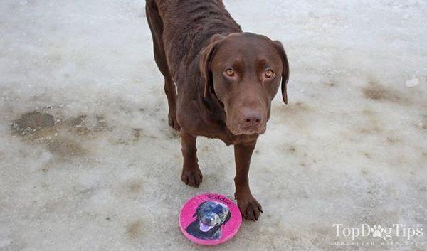 Recensione: pridebites custom frisbee toy (2018)