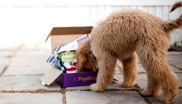 Recensione: scatola abbonamento cucciolo pupbox (2018)