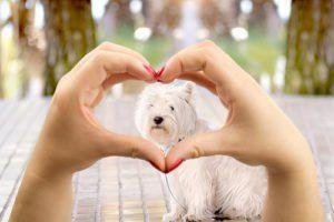 Scienza della psicologia uomo-cane: tu e il tuo cane siete una buona coppia?