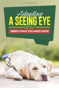 In vista dell`adozione degli occhi da cane: tutto ciò che devi sapere prima