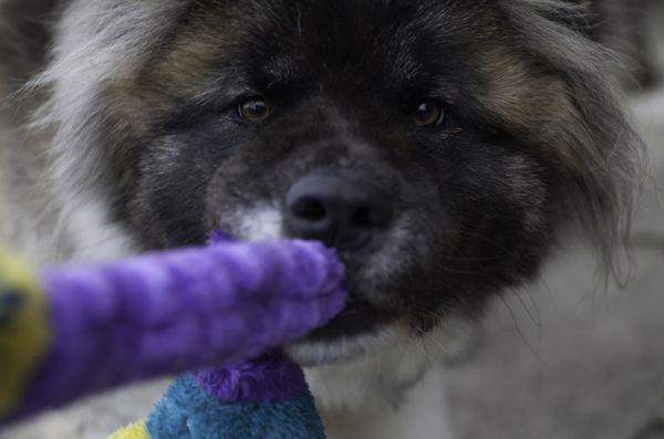 Sondaggio: i genitori di animali domestici britannici spendono di più per gli animali domestici che per i bambini