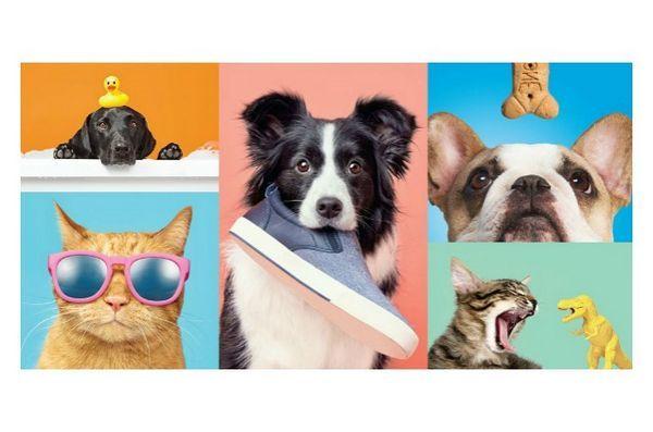 Coppie target con barkbox per offrire prodotti cool per animali domestici in negozio