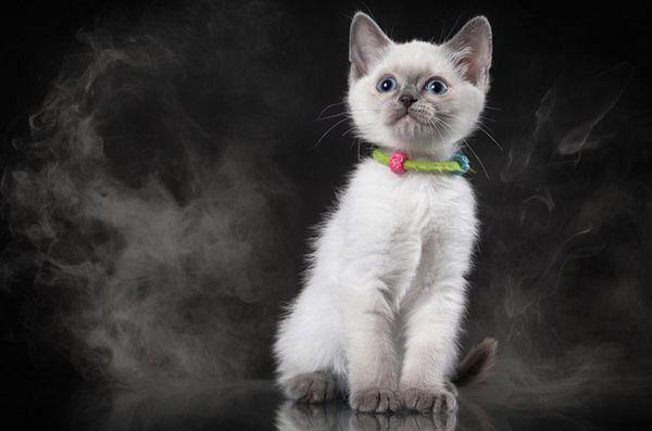 I pericoli del fumo passivo e del tuo gatto