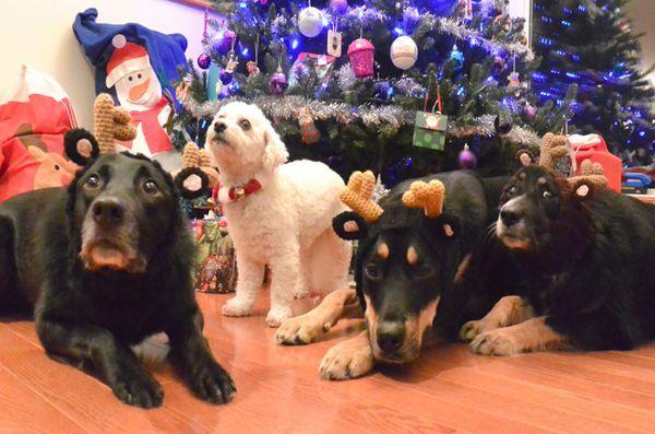 Il regalo peloso dei cani da pastore: idee regalo di Natale per il tuo essere umano