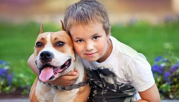 Cani della tana dei pitbull