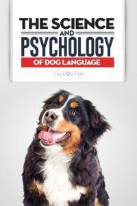 La scienza e la psicologia del linguaggio del cane: il tuo cane ti prende?