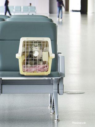 Gatto in un cat carrier nell`aeroporto