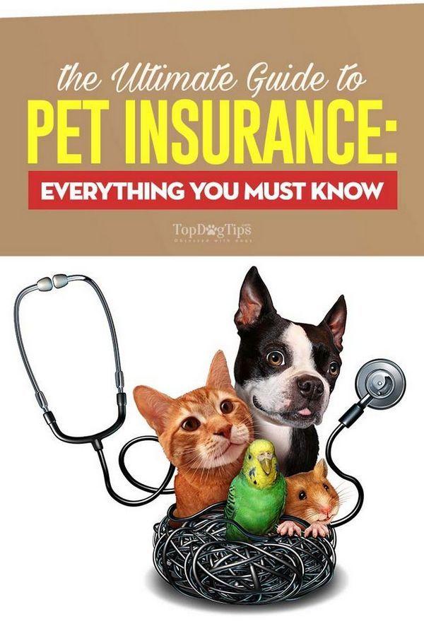 La guida definitiva all`assicurazione degli animali domestici: tutto ciò che devi sapere