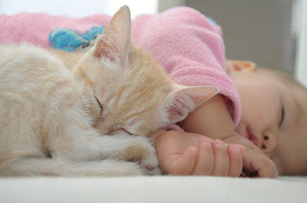 Suggerimenti per preparare il tuo gatto a un nuovo bambino