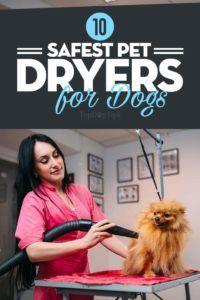 I 10 migliori essiccatori per cani per cani