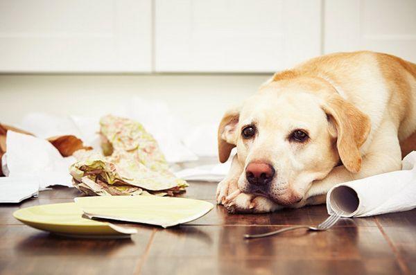 Top 10 prodotti domestici comuni velenosi per cani